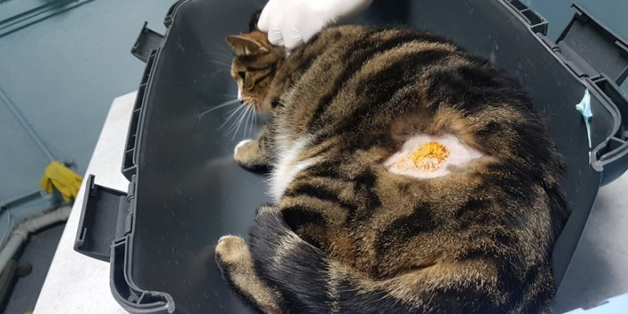 Evde kedi besleyenler dikkat! Kedisini severken fark etti hemen doktora gitti! Gerçeği öğrenince şok oldu