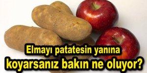 Patatesin yanına elma koyduğunuzda bakın ne oluyor?