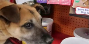 Aç Sokak Köpeğini markete götürdü Köpek neyi kokladıysa hepsini Satın Aldı gerçek ise..