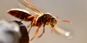 Rüyada Böcek Görmek Ne Anlama Gelir?